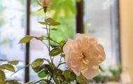 オフィスで楽しむ新しい植物の楽しみ方 ペットプランツ