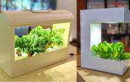 保護中: お部屋の中で収穫体験。野菜を育むインテリア「灯菜」