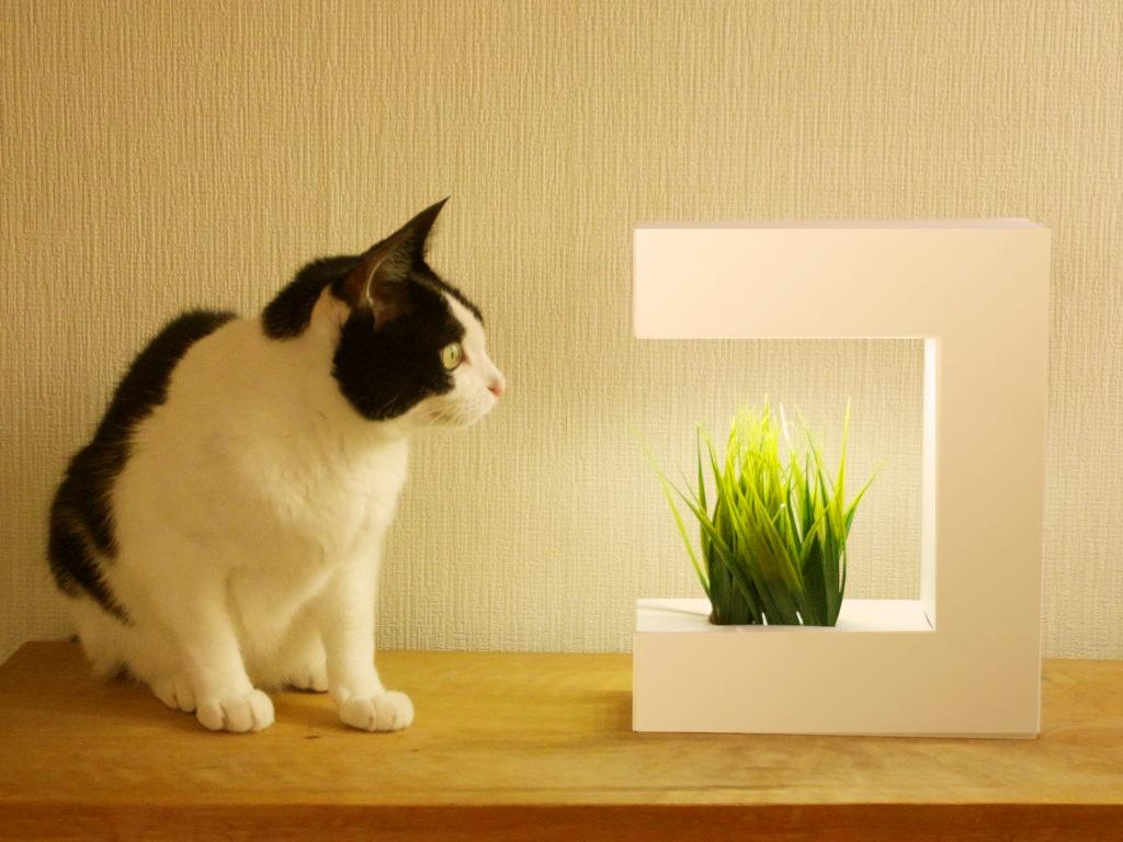 akarina14-猫と猫草