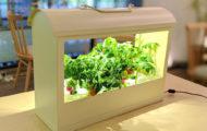お部屋の中で収穫体験を。野菜を育てるインテリア「灯菜」