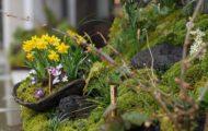 街並みに似合う、小さくて新しい「庭」のスタイル「一坪苔庭」